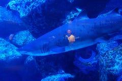 Tibur?n en agua azul brillante Reflexi?n de un hombre en un tibur?n fotografía de archivo libre de regalías