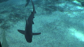 Tiburones 2 almacen de metraje de vídeo
