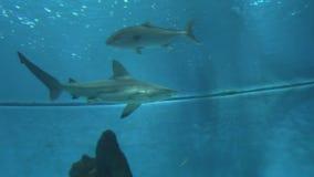 Tiburones 6 almacen de metraje de vídeo
