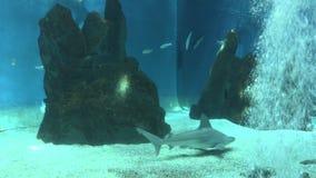 Tiburones 2 almacen de video