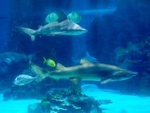 tiburones imagen de archivo