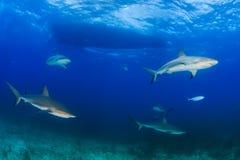 Tiburones debajo de un barco de la zambullida Imagen de archivo