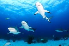 Tiburones del vuelo de la formación Fotografía de archivo