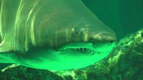 Tiburones y animales depredadores almacen de video