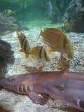 Tiburones y pescados de bambú Imagenes de archivo