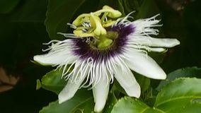 Tica de ³ d'exà de Flor Photos stock