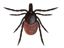 Tick Royalty Free Stock Image