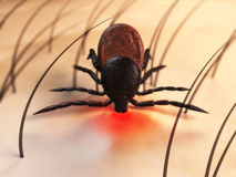 Tick bite. 3d rendered clos up of a tick on the skin Stock Image