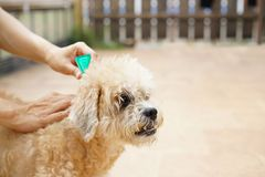 Tick and flea prevention for a dog. Close up royalty free stock photo
