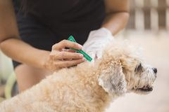 Tick and flea prevention for a dog Stock Photography