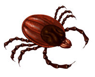 Tick Insect Stock Image