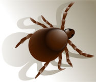 Tick insect. Illustration of tick - dangerous insect Royalty Free Stock Photography