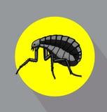 Tick Insect nero Fotografia Stock Libera da Diritti