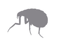 Tick Insect Shape Photo stock