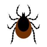 Tick insect vector illustration Stock Image