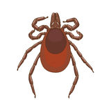 Tick mite insect vector illustration Royalty Free Stock Images
