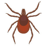 Tick mite insect vector illustration Stock Image