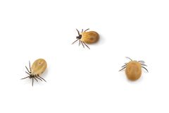 Tick Stock Images