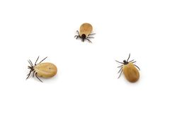 Tick Royalty Free Stock Photo