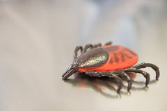 Tick Royalty Free Stock Photography