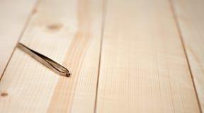 Tick on tweezers. On wooden background Stock Photography