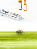 Tick vaccination Stock Photos