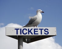 Ticket sign. Photo of a ticket sign with a visitor Stock Photography
