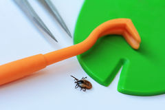 Ticks. Medical tools to remove ticks stock images