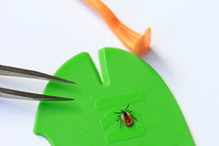 Ticks. Medical tools to remove ticks stock photography