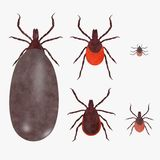 Ticks set. 3d render of tick animals Royalty Free Stock Images
