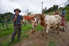 Tico farmer in Costa Rica. May 22, 2016 Florencia, Costa Rica: local farmer standing beside a bovine pulled carriage Royalty Free Stock Photography