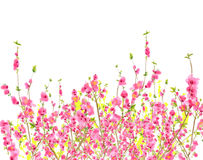 tid för fjäder för persika för bakgrundsblomningCherry Fotografering för Bildbyråer