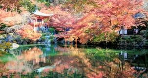 Tid för schackningsperiod för tid 4K schackningsperiod av den Autumn Japanese trädgården med lönn i Kyoto, Japan stock video
