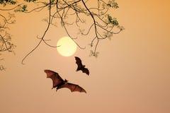 Tid för solnedgång för slagträkonturmedel Arkivfoto
