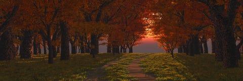 tid för solnedgång för skogvägfjäder royaltyfria foton