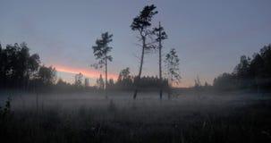 Tid schackningsperiod av mist i skogen arkivfilmer