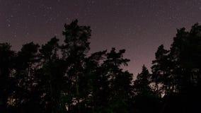 Tid schackningsperiod av skogträd och stjärnor i natthimlen arkivfilmer
