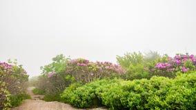 Tid schackningsperiod av slingan till och med Jane Bald Rhododendron lager videofilmer