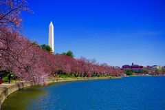 Tidal Basin in spring Stock Image