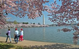 Tidal Basin and Washington Monument with Cherry Blossoms. Sightseers and tourists enjoy walking along the tidal basin in Washington, DC while the cherry blossoms royalty free stock images