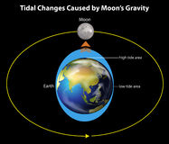 Tidal changes. An image showing the tidal changes caused by the moon's gravity Stock Images