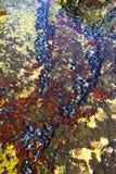 Tidal communities. Underwater tidal communities of atlantic seashore in New England during their famous Autumn Stock Photo