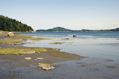 Tidal flats of a large river Stock Image