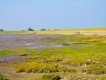 Tidal flats at low tide and people riding bikes on of West Frisian island Schiermonnikoog, Netherlands royalty free stock image