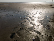 Tidal flats of wetlands Wadden Sea, Netherlands Royalty Free Stock Image
