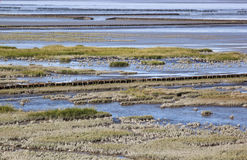 Tidal influence in Waddenzee, the Netherlands Stock Photos