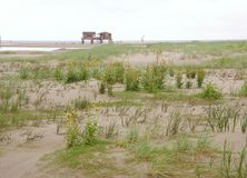 Tidal marsh Stock Photography