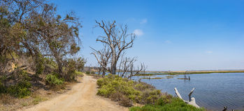 Tidal Pool and California Wetlands Stock Photography