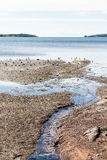 Tidal Pool with Gulls Stock Photography