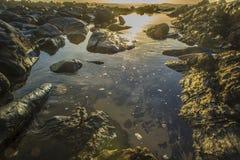 Tidal Pool at Sunset Royalty Free Stock Photo